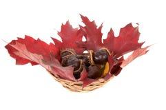 Kastanjes en eiken bladeren in een mand. Royalty-vrije Stock Afbeelding