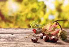 Kastanjes en rozebottels in een de herfsttuin Stock Fotografie