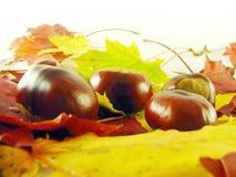 Kastanjes op de herfstbladeren stock afbeelding