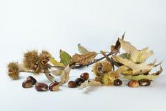 Kastanjetak met de herfstbladeren Stock Foto's