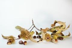 Kastanjetak met de herfstbladeren Stock Afbeeldingen