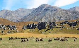 Kasteelheuvel en schapen stock afbeeldingen