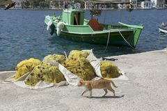 Kastellorizo harbour  - Cat and yellow fishing net Royalty Free Stock Photo