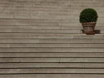 Kasten-Baum Lizenzfreie Stockfotografie