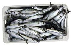 Kasten frische Fische Lizenzfreie Stockbilder