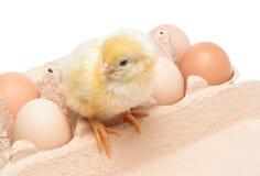 Kasten mit Eiern und einem kleinen Huhn Stockfotos