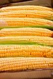 Kasten mit Mais stockbilder