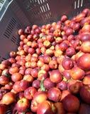 Kasten reife Nektarinen für Verkauf am Gemüsemarkt im Sommer Lizenzfreie Stockfotos