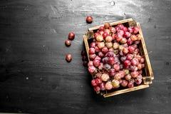 Kasten rote Trauben Stockfotografie