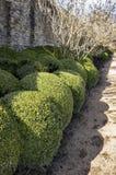 Kasten Topiarybälle Stockfoto