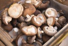 Kasten voll Pilze Lizenzfreies Stockfoto