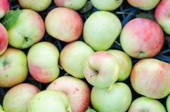 Kasten voll von Äpfeln von oben genanntem im Garten stockbilder