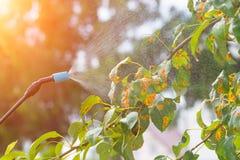 Kastrieren des Baums mit Wasser oder Schädlingsbekämpfungsmitteln Lizenzfreie Stockfotos