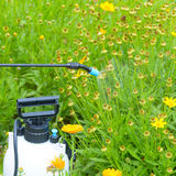 Kastrieren von Blumen mit Wasser oder Schädlingsbekämpfungsmitteln Lizenzfreie Stockfotografie