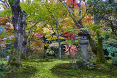 Kasuga doro eller stenlykta i trädgård för japansk lönn under höst på den Enkoji templet, Kyoto, Japan Royaltyfria Bilder