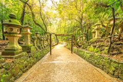 Kasuga Taisha植物园 库存照片