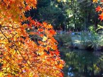 Kasuga Taisha Shinen Manyo Botanical Garden in autumn season Royalty Free Stock Photo