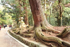 Kasuga Taisha Shrine, Nara,Japan royalty free stock photo