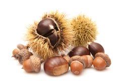 Kasztany i acorns Obraz Royalty Free