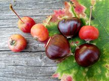 Kasztany i mali jabłka Obraz Stock