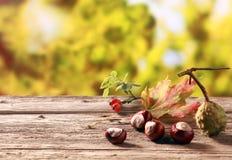 Kasztany i różani biodra w jesieni uprawiają ogródek Fotografia Stock