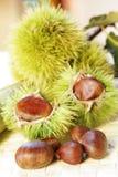 kasztany słodcy Fotografia Stock