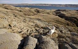 kasztelów diefenbaker jeziorny piasek zdjęcia royalty free