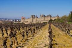 Kasztel Carcassonne i winnica, Francja Fotografia Royalty Free