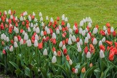 Kasztel Groot-Bijgaarden - ogródy Obrazy Stock