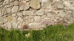 Kasztel rycerze templariusz stary w Transcarpathia kasztelu rujnuje zbiory