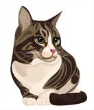 Kat royalty-vrije illustratie