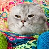 Kat stock fotografie