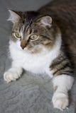 Kat Royalty-vrije Stock Foto's