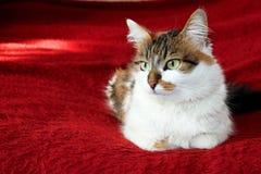 Kat Royalty-vrije Stock Afbeelding