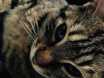 Kat Stock Afbeeldingen