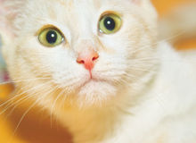 kat Стоковые Фото