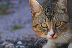 Kat Stock Foto