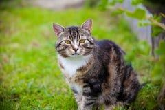 Kat in aard Royalty-vrije Stock Afbeeldingen
