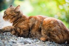Kat in aard Royalty-vrije Stock Fotografie