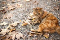 Kat in aard Stock Foto