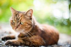 Kat in aard Stock Afbeelding