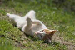 Kat in aard Royalty-vrije Stock Afbeelding