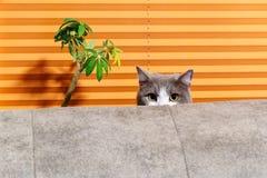 Kat achter bank tegen oranje achtergrond royalty-vrije stock afbeeldingen