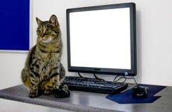 Kat, achtergrond, wit, laptop, leuk bord, tekst, katje, reclame, zwarte, lege pot, mooi, mooi, mon stock afbeelding