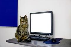 Kat, achtergrond, wit, laptop, leuk bord, tekst, katje, reclame, zwarte, lege pot, mooi, mooi, mon royalty-vrije stock afbeeldingen