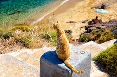 Kat in Agios Sostis-strand Stock Afbeelding