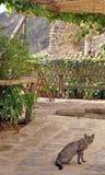 Kat in agriturismo Royalty-vrije Stock Foto