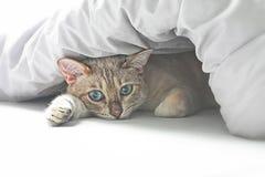 Kat in bed Royalty-vrije Stock Afbeelding