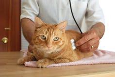 Kat bij de dierenarts Stock Afbeelding