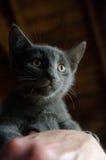 Kat bij dierlijke schuilplaats Stock Foto